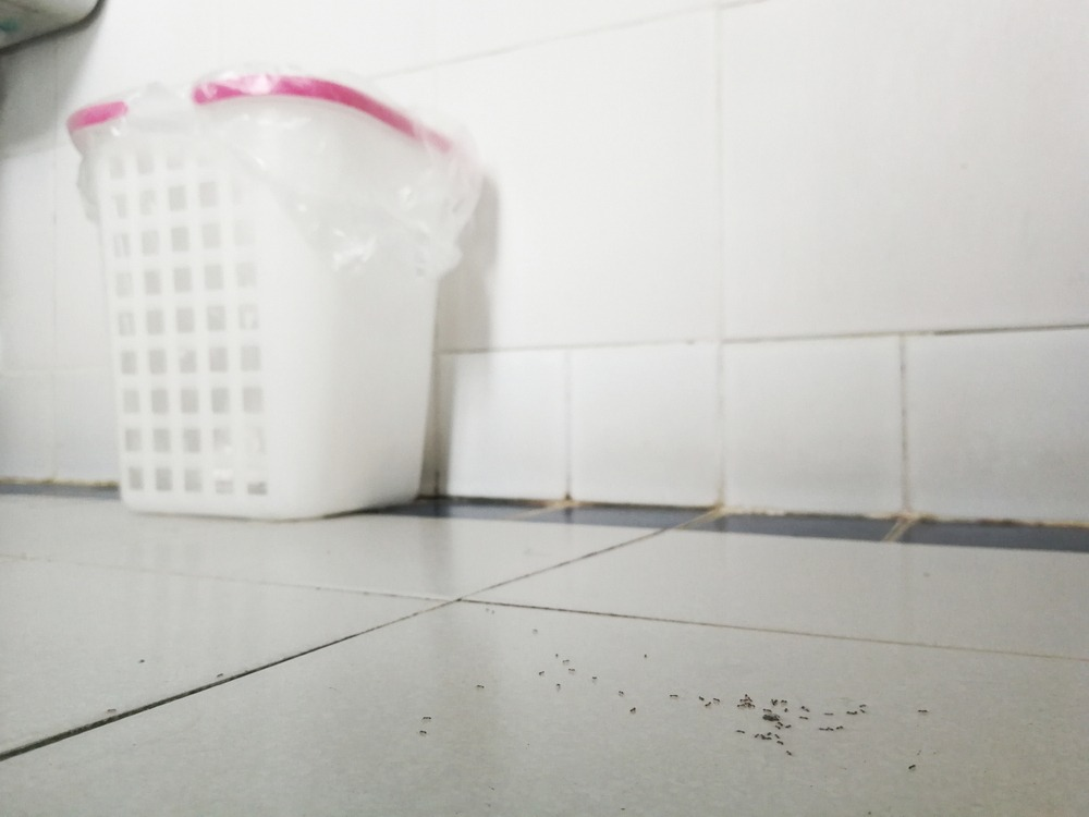 Ants on bathroom floor