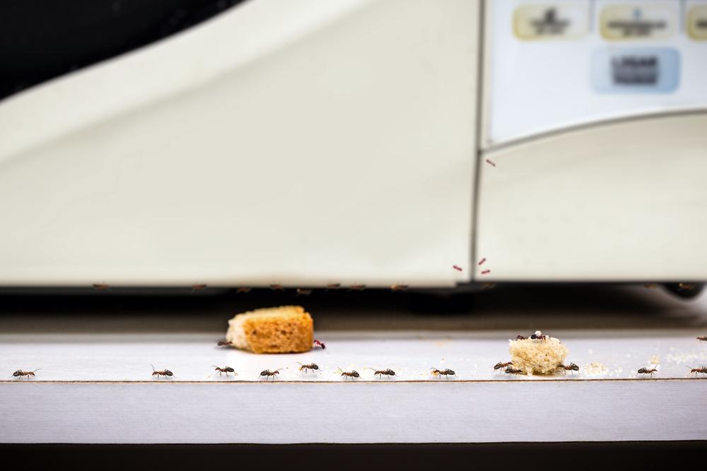 Ants on bread