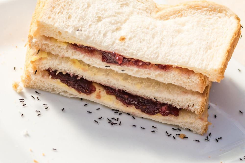 Ants on Sandwich