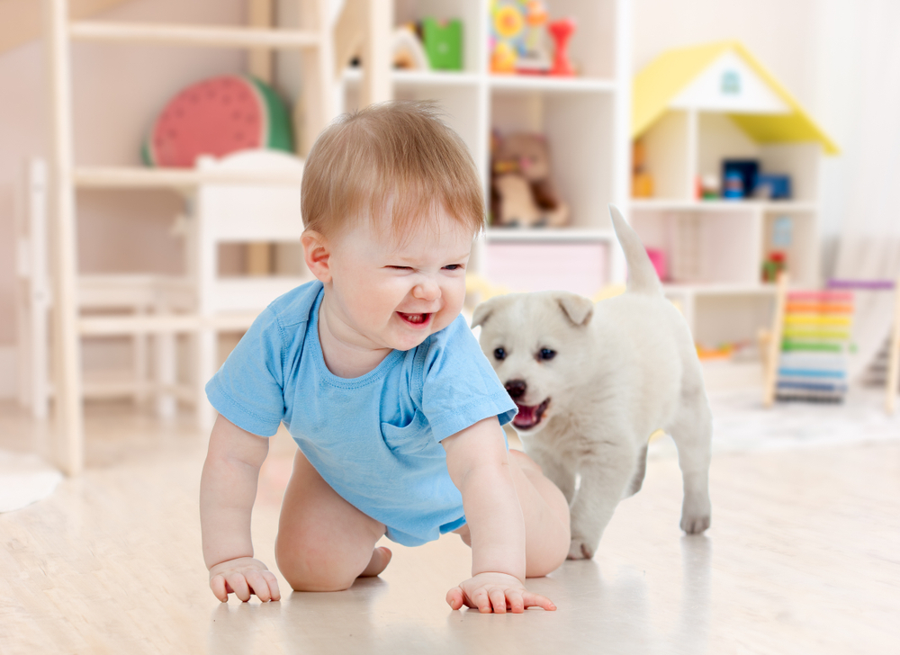 Kid playing with pet